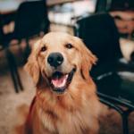 Tutti i benefici degli animali in ufficio